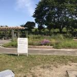 水源公園 花畑