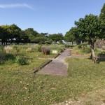 水源公園 緑