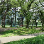 上大島キャンプ場 キャンプ場4
