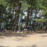 上大島キャンプ場 キャンプ場2