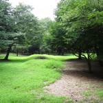 府中の森公園 武蔵野の森