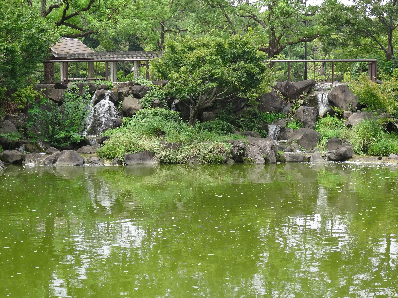 府中の森公園 日本庭園風の池
