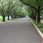 府中の森公園 中心を歩道が伸びる