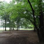 府中の森公園 豊富な緑が癒してくれます。