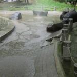 府中の森公園 水場が豊富で水遊びに最適