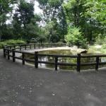 北野公園 内池