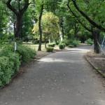 北野公園 野球場を沿うように遊歩道が伸びる。