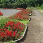 多摩川中央公園 花壇