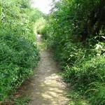 多摩川中央公園 散策路は探検気分
