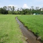 多摩川中央公園 野球場隣の小川