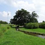 多摩川中央公園 池へと続く流れ