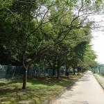 福生南公園 遊歩道