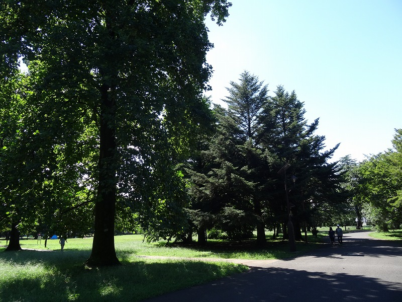 小金井公園 生い茂る木々