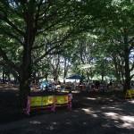 小金井公園 歩道からの一枚