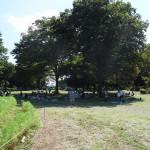 小金井公園 ピクニックも楽しめます。
