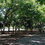 小金井公園 木漏れ日の中お散歩を