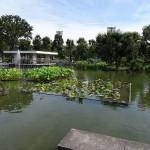 郷土の森公園 蓮の池