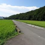 望地弁天キャンプ場へと続く田園風景