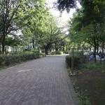 武蔵野中央公園 遊歩道