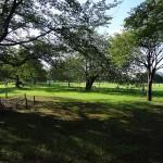 武蔵野中央公園 木々が生い茂り真夏でも涼しげ。