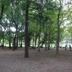 武蔵野公園 BBQ場の光景