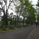秋留台公園 競技場横の遊歩道