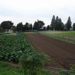 秋留台公園 ふれあい農場で農業体験