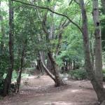 若葉台公園 雑木林の中を探索