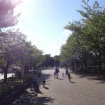 いこいの森公園 原っぱ広場へと