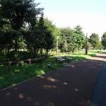 いこいの森公園 遊歩道