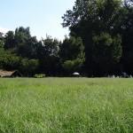 いこいの森公園 原っぱ広場