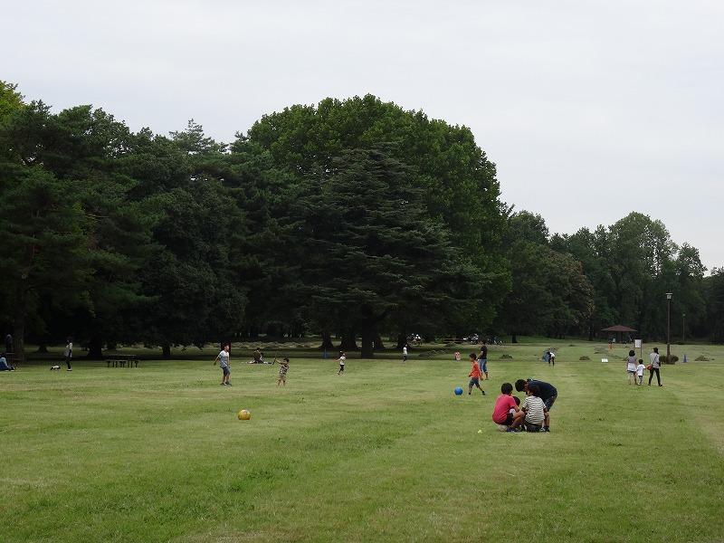 野川公園 大芝生