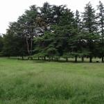 野川公園 緑が豊富
