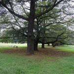 野川公園 大木の木陰で一休み