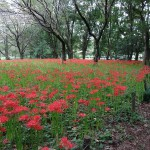 野川公園 自然観察園内