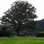 高田橋河川敷 夏の午後の一コマ