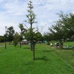 稲城北緑地公園 ピクニック広場12