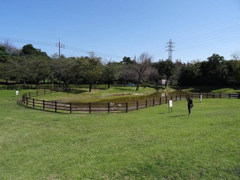 さくら運動公園 (29)