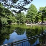 光が丘公園 バードサンクチュアリ内 池