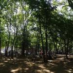 光が丘公園 バーベキュー施設