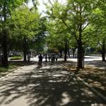 光が丘公園 最寄駅への歩道