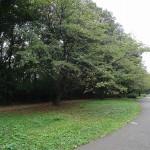 小山内裏公園 尾根緑道