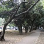 和田堀公園 BBQ広場横散策路