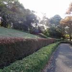 富士見台公園 遊歩道