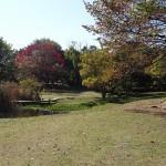 清瀬金山緑地公園横 柳瀬川河川敷(東京都 清瀬市)をおすすめスポットに追加しました。