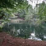 鎌田公園 井之頭公園