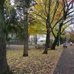 たけのこ公園 遊歩道