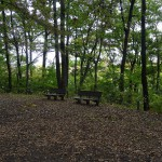 つどいの森公園 樹林地散策路