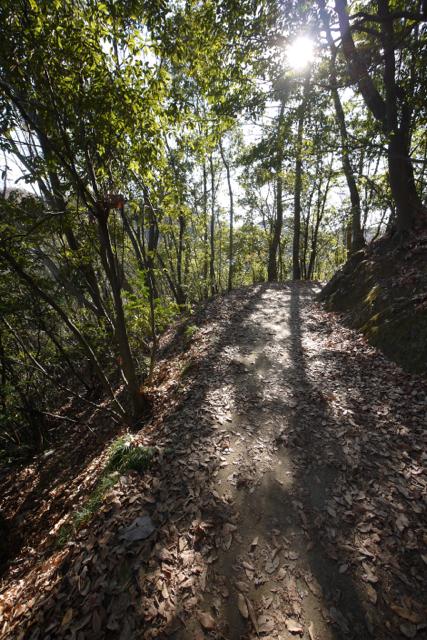 稲毛山登山路