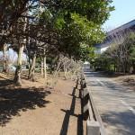 江東区立若洲公園 サイクリングロード